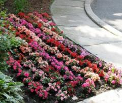 Registration of flower beds