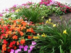 Organizations of a flower cultivation