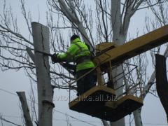 Cutting of trees in Kherson