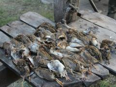 Охота на утку.Рыболовно-охотничьи угодия