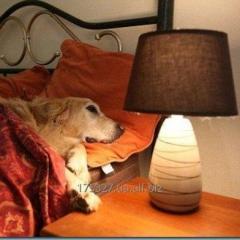 Гостиница для собак (передержка) в Харькове