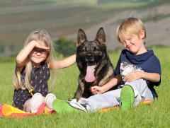 Собака подготовленная для новой семьи