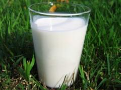 We collect fresh milk on the Kherson region