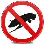 Extermination of cockroaches. Fight against