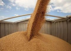 Services in transportation of grain crops