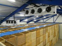 Potato storage (The refrigerator for storage of