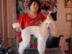 Зоопарикмахерская для любимых собак и котов в Херсоне.