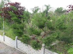 Strzyżenie żywopłotów, drzew i krzewów
