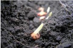 Diagnostics of fertility of soils