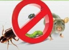 Знищення щурів' мишей,  тарганів, молі, клопів, бліх