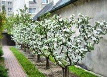 Обрезка деревьев. Услуги садовника. Комплексное обслуживание сада.