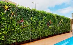 Вертикальное озеленение на даче Черновцы