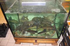 Установка торговых аквариумов, чаши аквариума