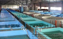 Установка оборудования рыбных ферм УЗВ