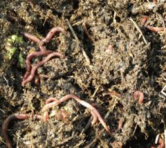 Услуга по внесению удобрений под газон