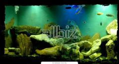 Подбор оборудования для аквариумов