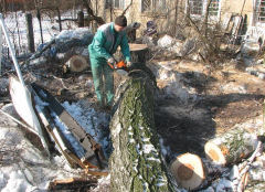Cutting down of trees