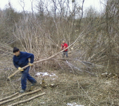 Cutting down of bushes