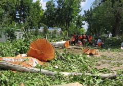 Vykorchevaniye of stubs