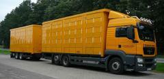 Перевозка зерновых автотранспортом по Украине