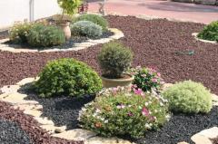 Подбор растений для ландшафтного дизайна Херсон