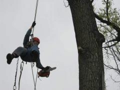 Промышленный альпинизм для обрезки деревьев Херсон Украина