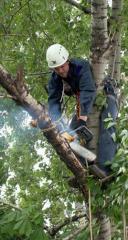Обрезка деревьев методом промышленного альпинизма Херсон