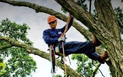 Услуги промышленного альпинизма для обрезки деревьев Херсон