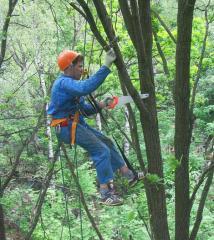Услуги промышленного альпинизма для обрезки деревьев Украина