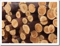 Распилить дерево, спилить дерево, распилить палено, нарезать дрова, в Херсоне - работа бензопилой