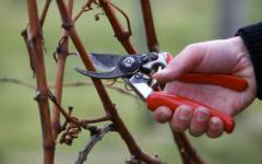 Обрезка деревьев, винограда, кустов в Херсоне.