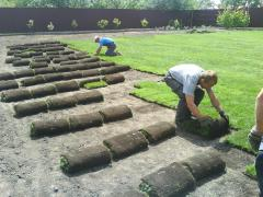 Complex of works on laying of rolled lawns