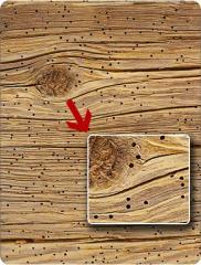 Уничтожение вредителей дерева деревянных домов