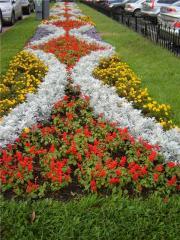 Створення клумб, квітників, раток,