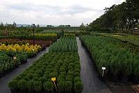 Услуги комплексного озеленения