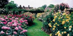 Устройство цветников и розариев