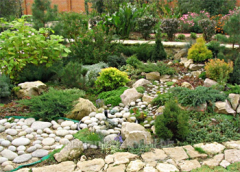 Services creation of rock gardens