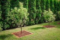 Услуги посадки деревьев
