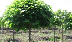Посадка лиственных растений