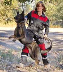 Training of dogs