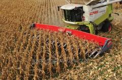 Harvesting of corn combine