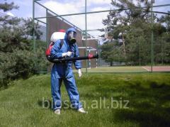 Уничтожение насекомых. Борьба с муравьями