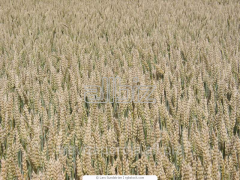 Harvesting services