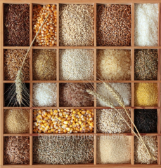 EXPORT: GRAIN, DERIVATIVES, OIL SEEDS AND PULSES