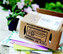 Utilization of paper, paper container and