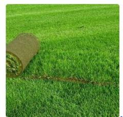 Laying of a rolled lawn