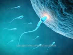 Surrogacy on donor an ovum