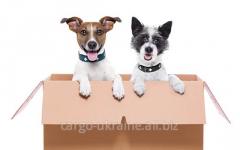 Международная перевозка собак, кошек, хорьков