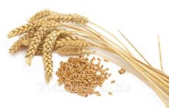 Анализ качества пшеницы
