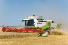 Services by combines on cleaning of grain crops,